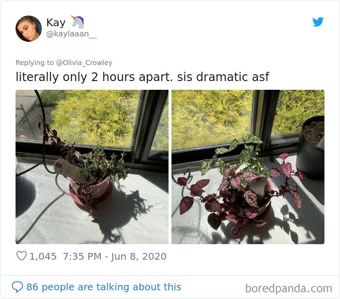 Overdramatic-Plants