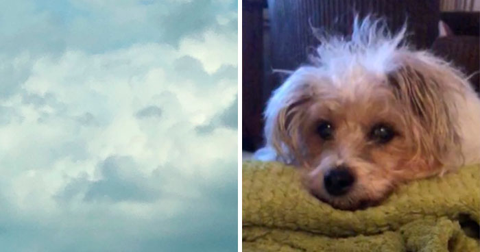 Woman Sees 'Her Dog' In The Sky A Few Hours After Her Death, Others Share Similar Pics And Stories