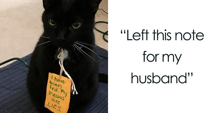 40 Hilarious Pets That Got Shamed Publicly For Being Naughty Bored Panda