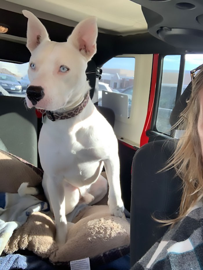 This Was Hank In Jan 2020 When I Picked Him Up From A Transport That Brought Him To Massachusetts From Arkansas Where He Was In A Foster Home