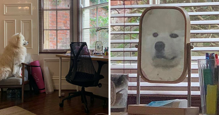 30 Pets That Discovered Mirrors