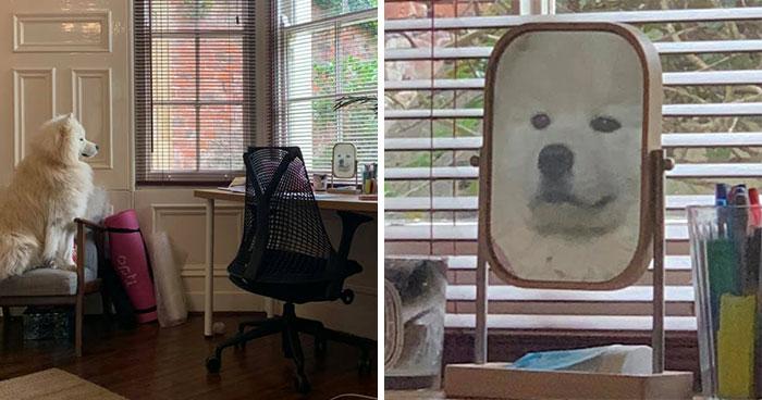 30 Mascotas que han descubierto los espejos
