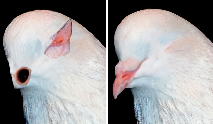 Scientists Share A Pigeon Facial Recognition Study, Tumblr User Summarizes It With A Hilarious Explanation