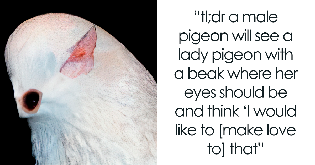 Scientists Tested Pigeons' Facial Recognition Abilities And This Tumblr User Summarized It In A Hilarious Way