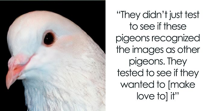 Science Tested Pigeons' Facial Recognition And This Tumblr User Summarized It In A Funny Way