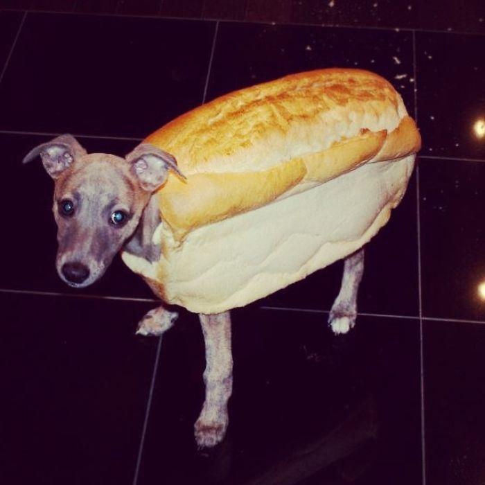 Pippa The Hot Dog