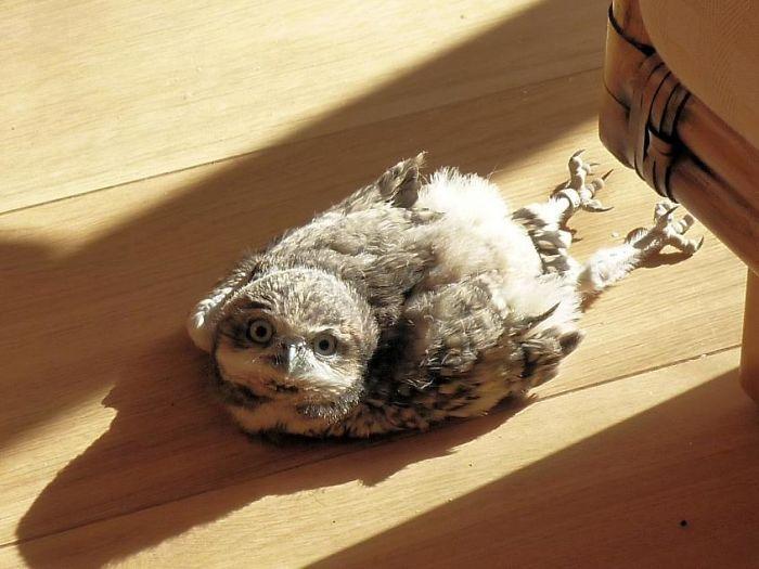 cute sleeping owls