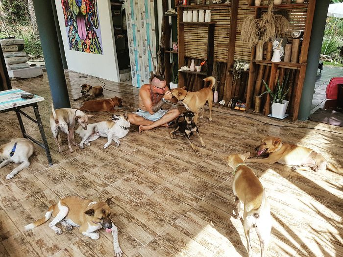 Couple Moves To Thai Island, Adopts 15 Strays After Losing Their Beloved 10 Y.O. Doggo