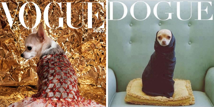 People Are Creating 'Dogue' Covers By Editing Their Dogs Into Them (30 Pics)