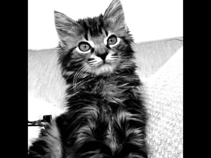 Callie About 12 Weeks Old. At 15 She Is Still Posing For Photos!