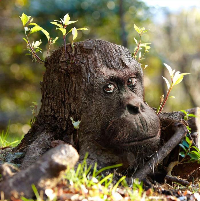 Deforestapetion
