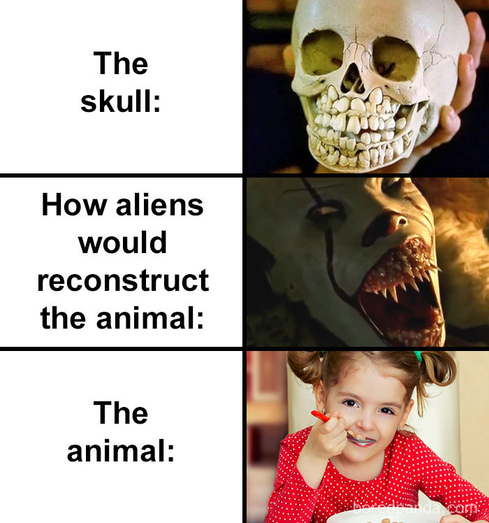 Skull-How-Aliens-Would-Reconstruct-Animal-Meme