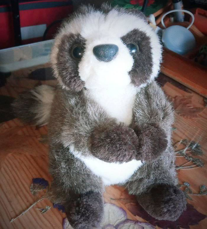 This Raccoon Plushie Is Federico. He's Been With Me For More Than 30 Years. It Was A Present By My Late Great Uncle