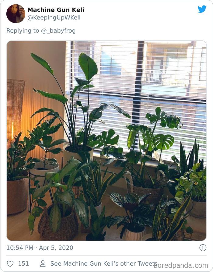 Thực vật-Nỗi ám ảnh-Minh họa-Cecile-Dormeau