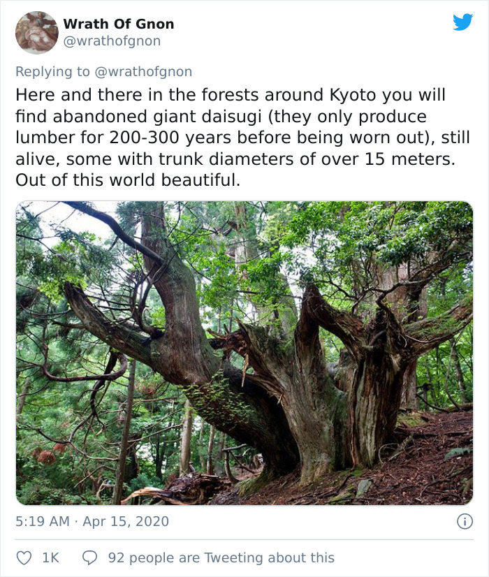 Apparently, This Ancient Japanese Technique From The 14th Century Allows People To Produce Lumber Without Having To Cut Down Trees