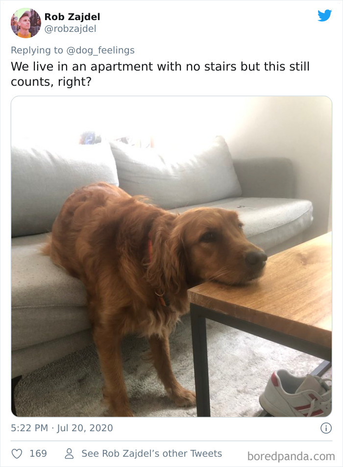 The-Rarest-Sit-Dogs-Stairs-Thoughts-Of-Dog
