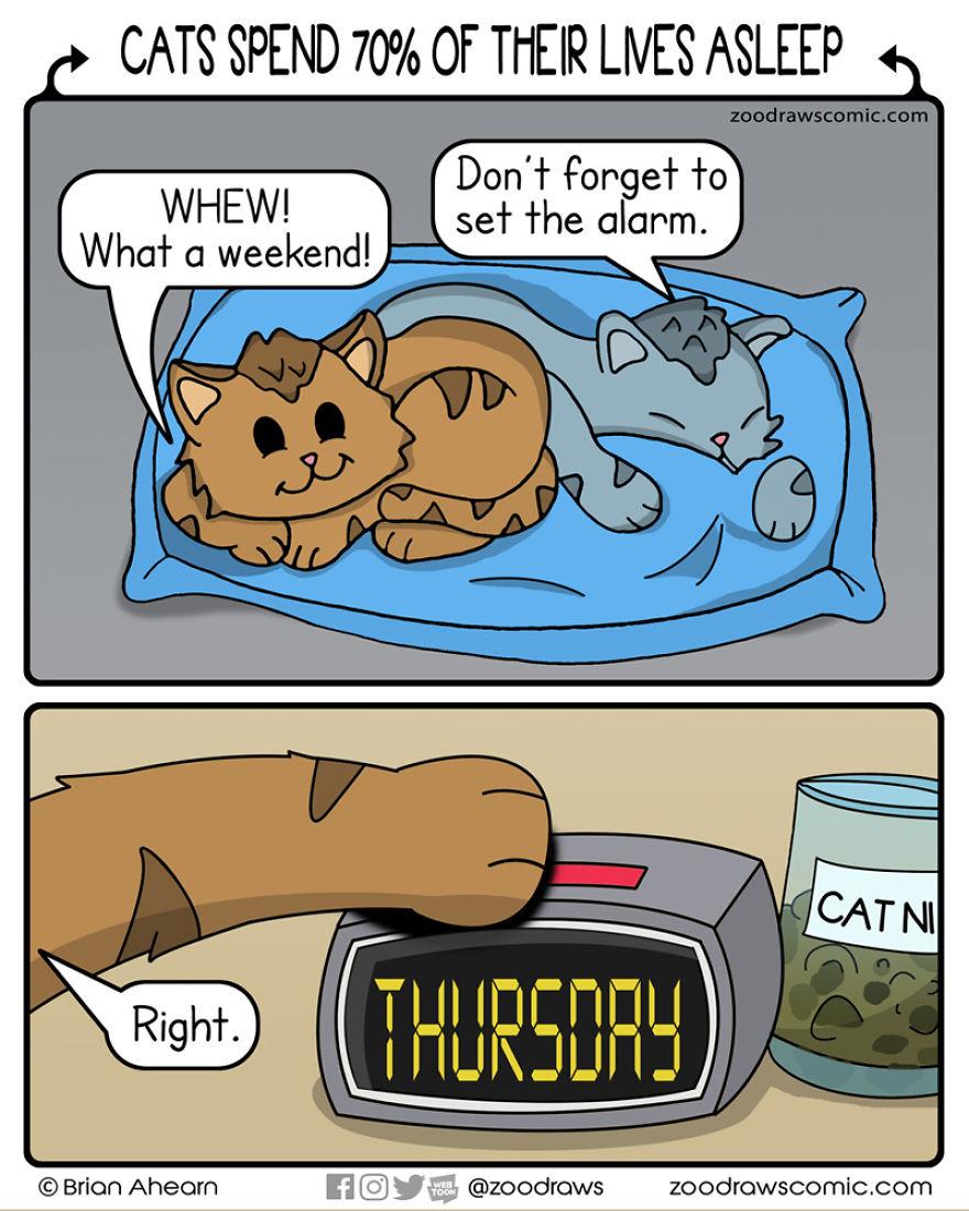 That Sweet Cat Life