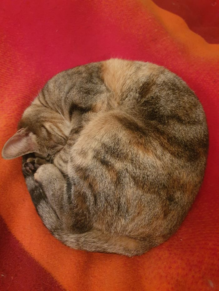 Almost A Perfect Circle...