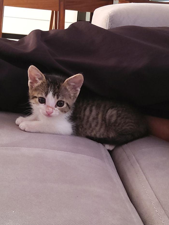 Lola My Lovely Kitten