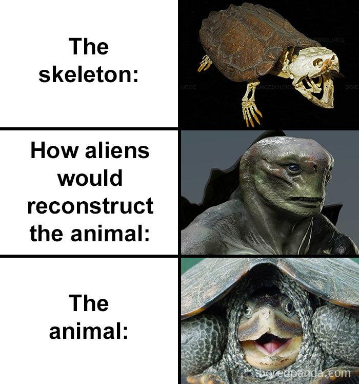 Skull-How-Aliens-Would-Reconstruct-Animal-Meme