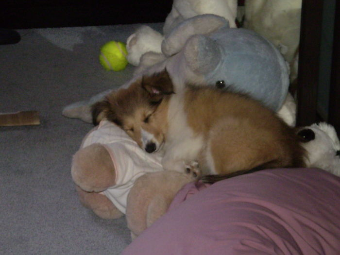 """2 Months Old Jazz """" I'll Just Hide Here Among Mom's Toys, She'll Never Notice"""""""