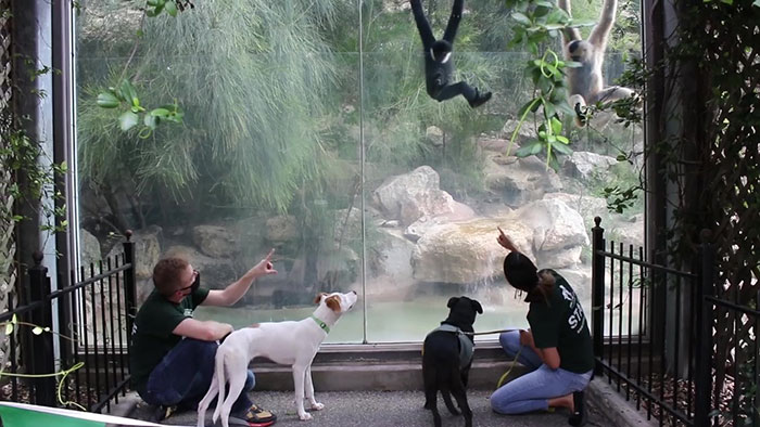 These Shelter Pets Were Taken On A Field Trip To Meet Their Exotic Relatives At The Local Zoo