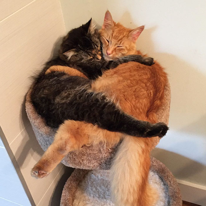 People Are Posting Cats Sleeping Together In The Weirdest Positions And Forming New Shapes (63 Pics)