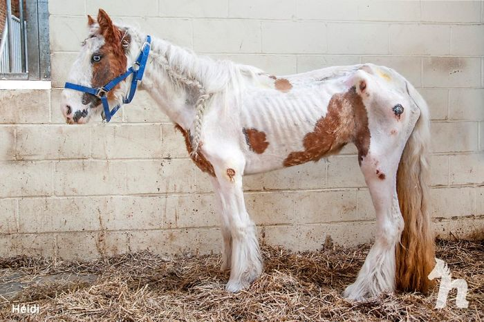 Volunteers 'Shocked' To See This 'Dead' Horse Still Alive Nurse It Back To Health And The Transformation Is Incredible