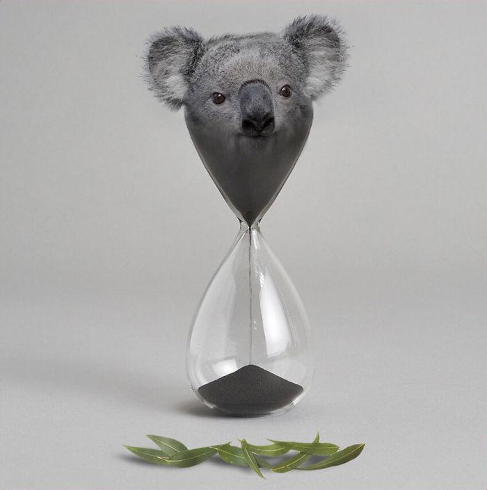 Koalaware V2.0