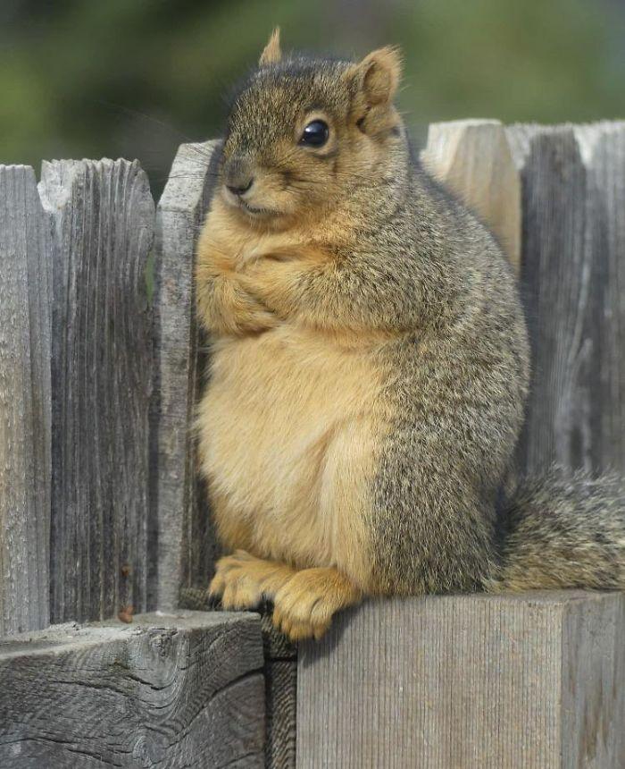 Defiant Squirrel