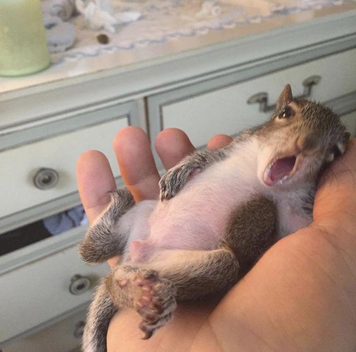 Milk Drunk Baby Squirrel