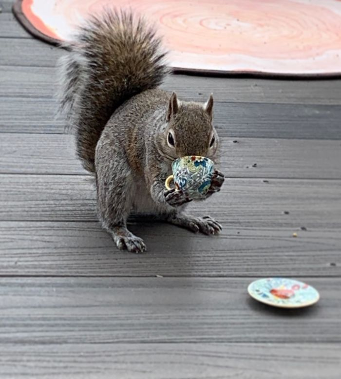I Filled A Tiny Tea Cup With Some Walnuts For My Squirrel Friend