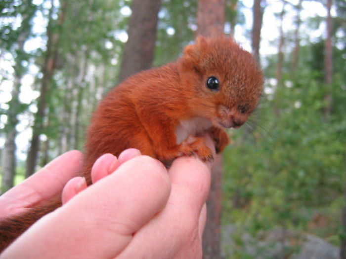 We Adopted A Badly Injured Baby Squirrel. Here's One Of The First Photos Of Him