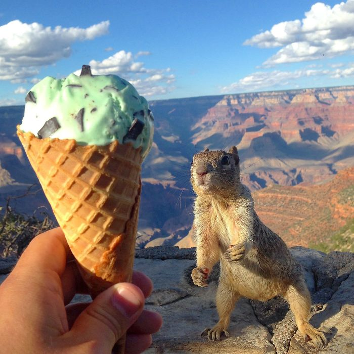 On A Recent Trip To The Grand Canyon, I Was Reprimanded For Taking This Picture. Totally Worth It