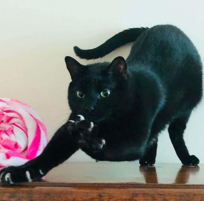 Yoshi, The Panther