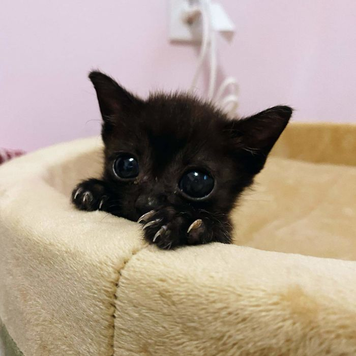 Illegally Tiny And Adorable Murder Mittens