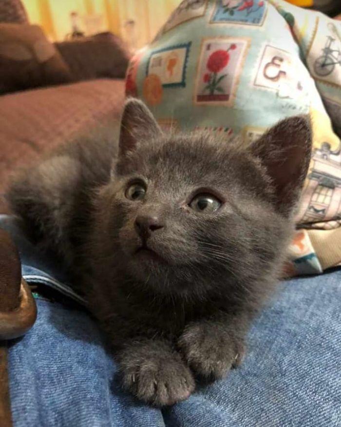 Por fin he podido adoptar a un gato, este es Apolo
