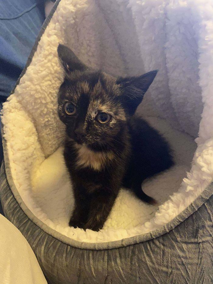 He adoptado a esta gatita callejera, se llama Astrid
