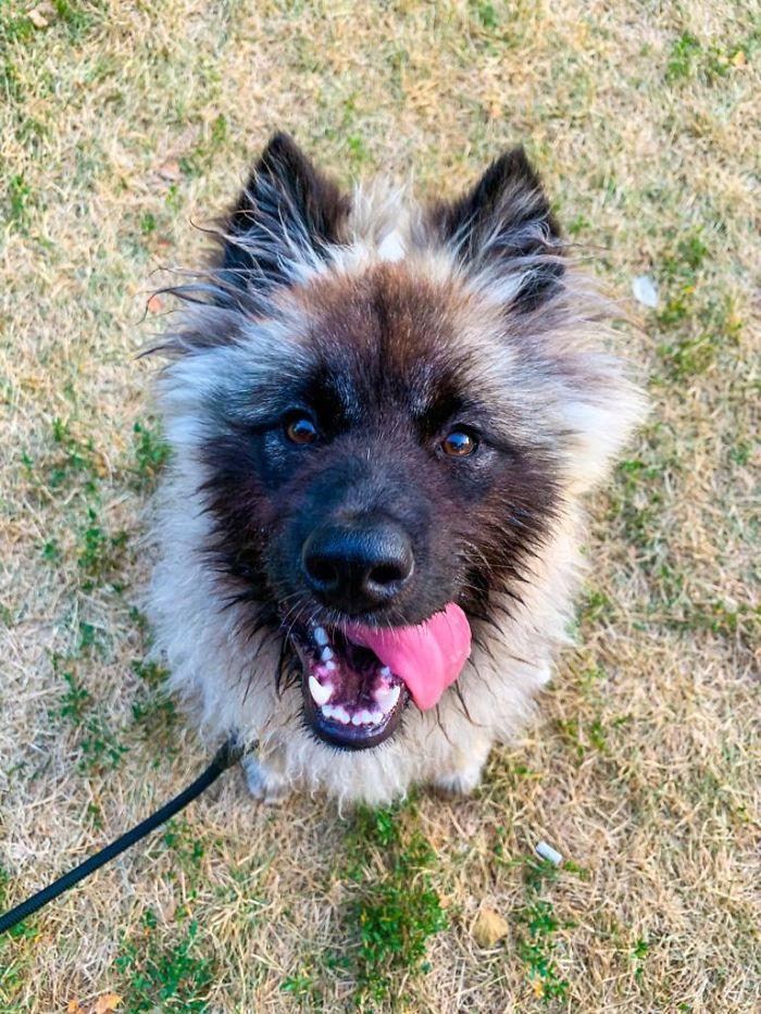 Su primera visita al parque para perros