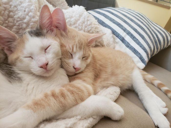 Este refugio solo deja adoptar gatitos en parejas, ya veo por qué
