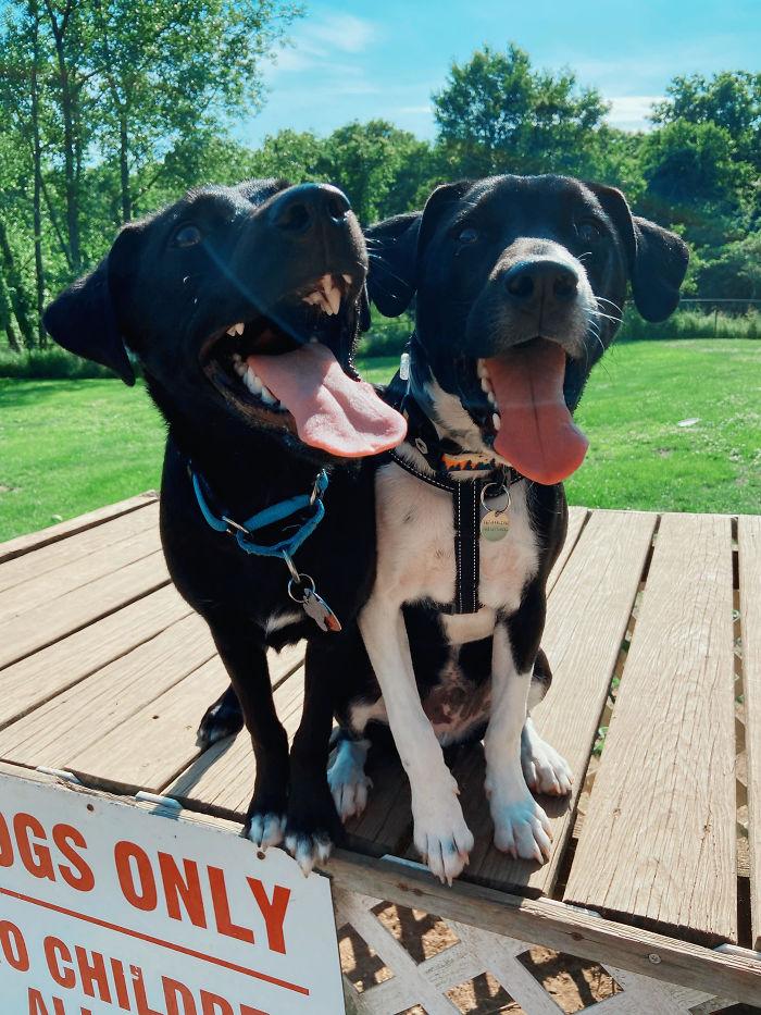 Rescatamos a un cachorro en la otra punta del país, y descubrimos que uno de sus hermanos también fue adoptado aquí cerca. Concertamos una cita para que jugaran