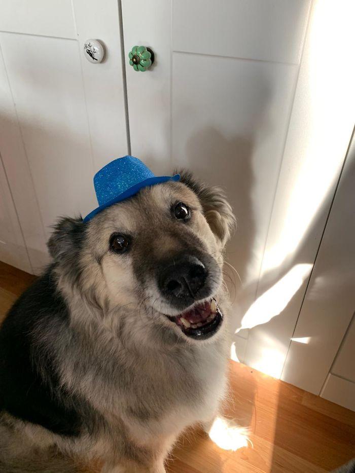 Mis padres han adoptado a Hoagie, de 14 años, y le han comprado un sombrero