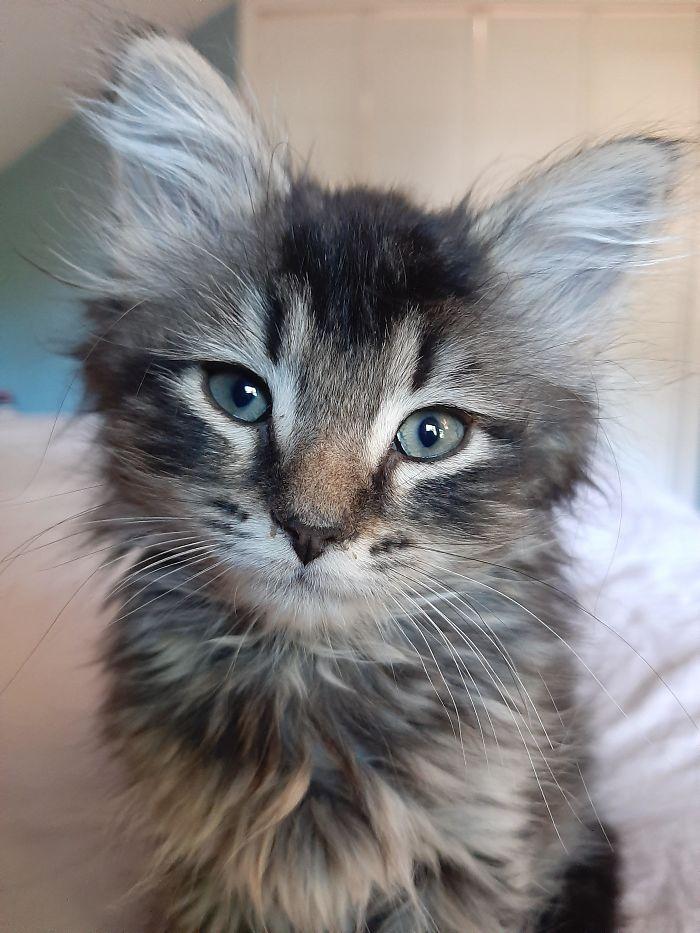 Este es Ashby, tiene 7 semanas
