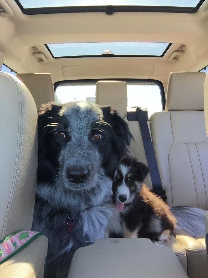 Adoptamos a Zelda, y pasó varias semanas pensando que Chloe era su madre