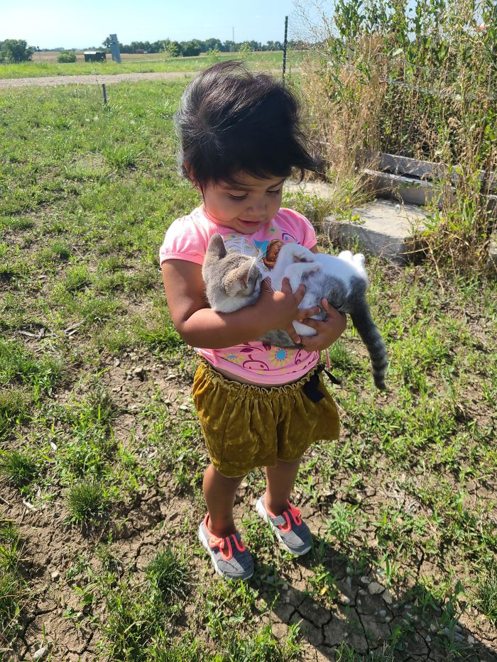 Tenemos un gatito nuevo y mi hija cree que es su bebé
