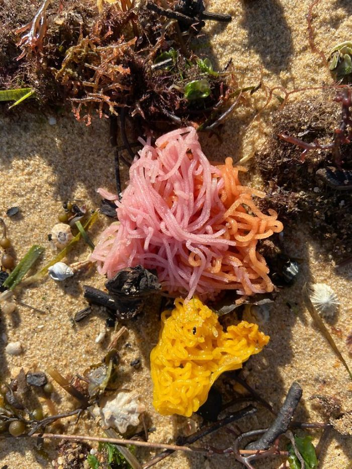 What Are These Brightly Coloured String-Like Things That Were Washed Up On An Australian Beach?