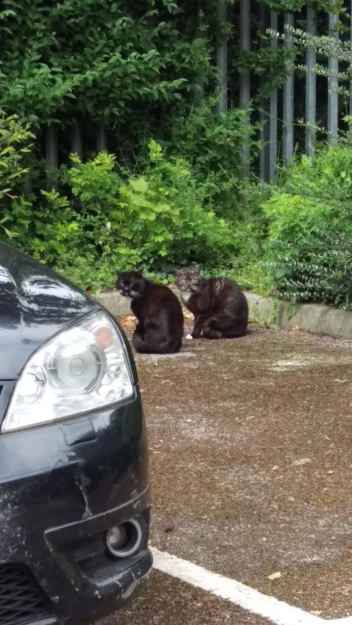 Felt Like I Was Interrupting A Cat Drug Deal Today
