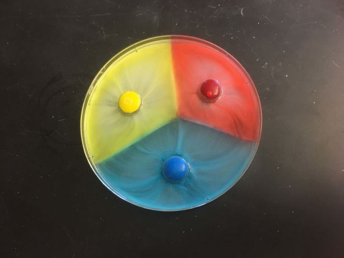 What Happens When You Put M&ms In A Dish Of Water. Diffusion Force Barriers