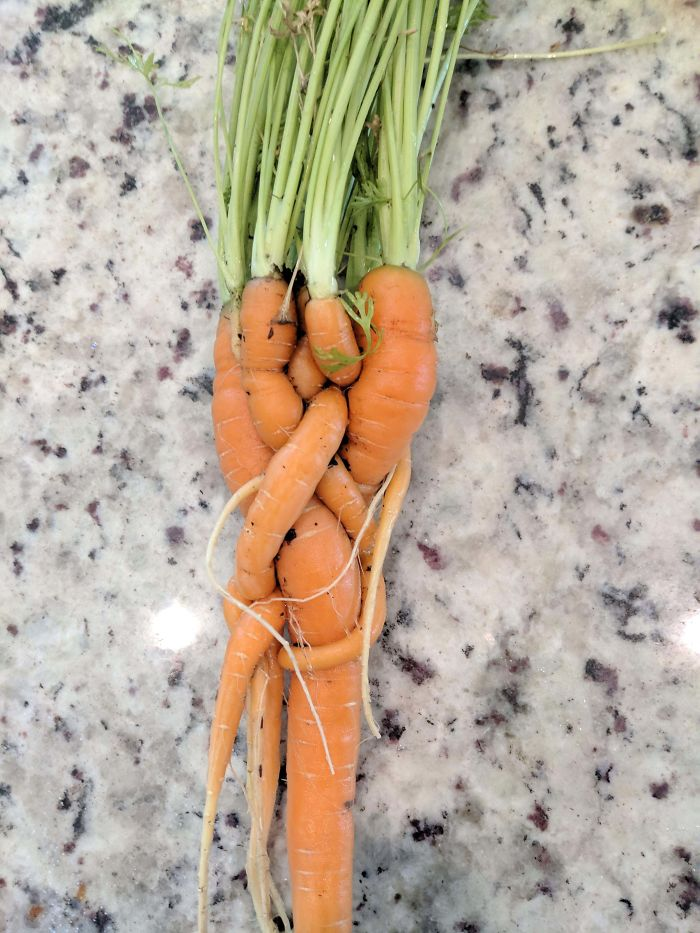 This Is What Happens When You Fail To Thin Out Your Carrots