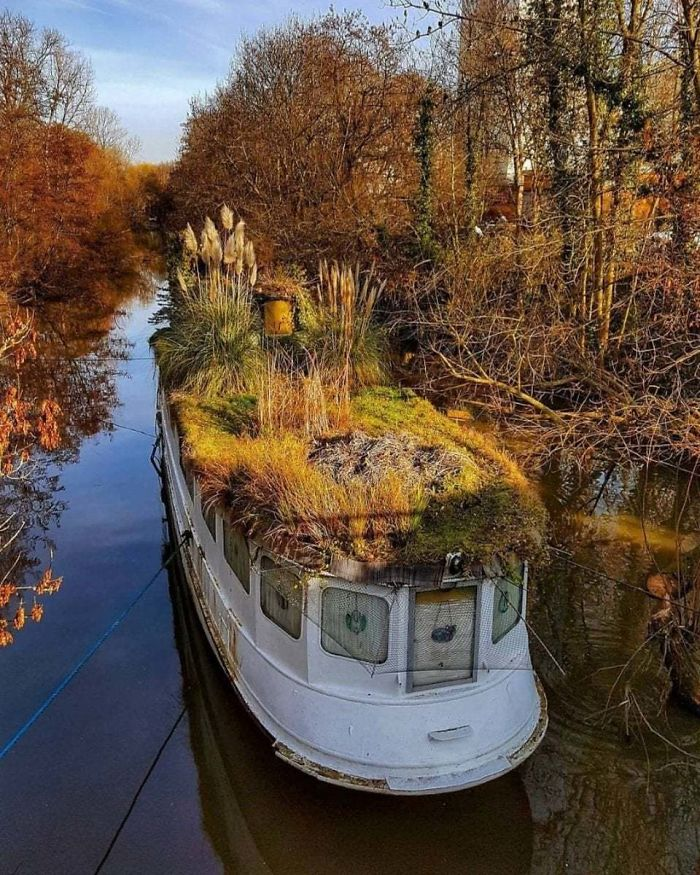 What Happens When Nature Takes Over- This Boat On A River In Frankfurt, Germany